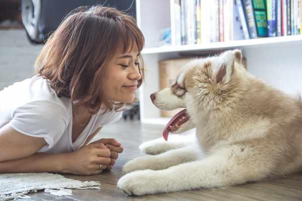 Nosówka u psa, czyli dlaczego profilaktyka u szczeniąt jest tak ważna